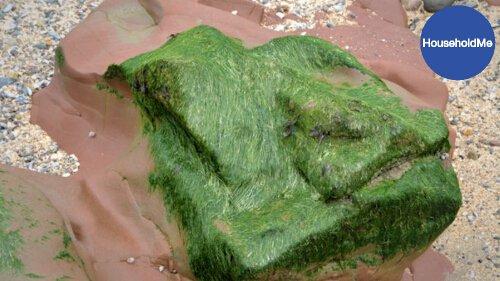 how to get rid of algae in pool