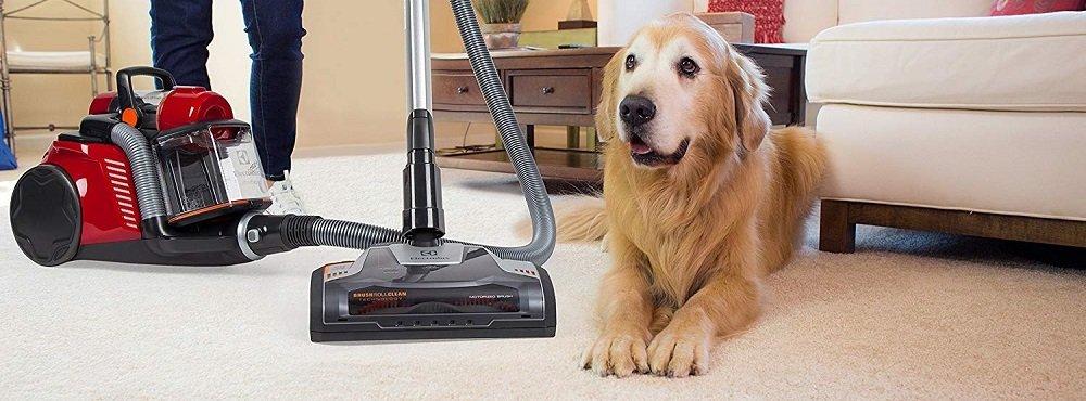 Canister Vacuum vs Upright Vacuum