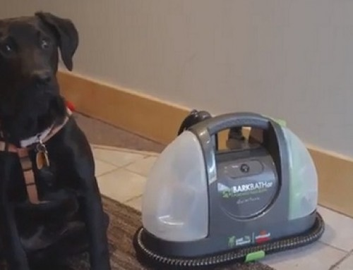 🥇 Bissell BARKBATH QT QuietTone Portable Dog Bath Review