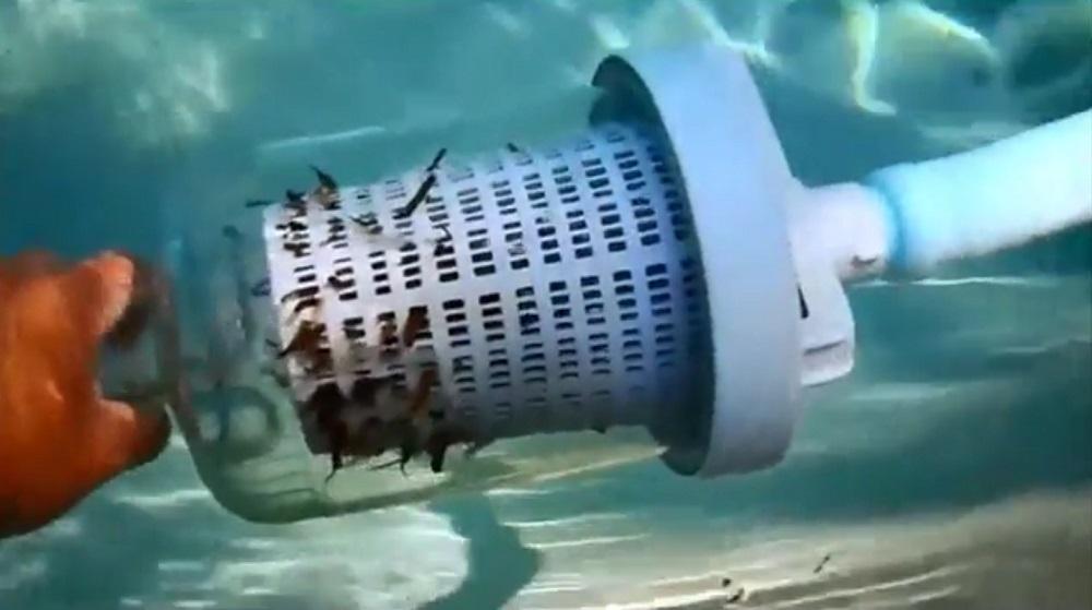 Poolvergnuegen Automatic Suction Pool Vacuum Review